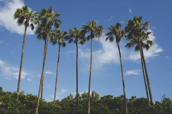 Orlando Palms